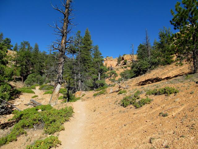 Climbing the Rich Trail