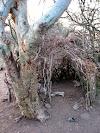 Hadzabe shelter