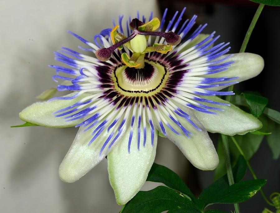 by Vladymyr Sergeev - Nature Up Close Flowers - 2011-2013