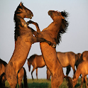 Wild Horses Live Wallpaper icon