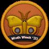 Moth Week 2020