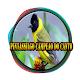 Pintassilgo Campeao Do Canto Download on Windows