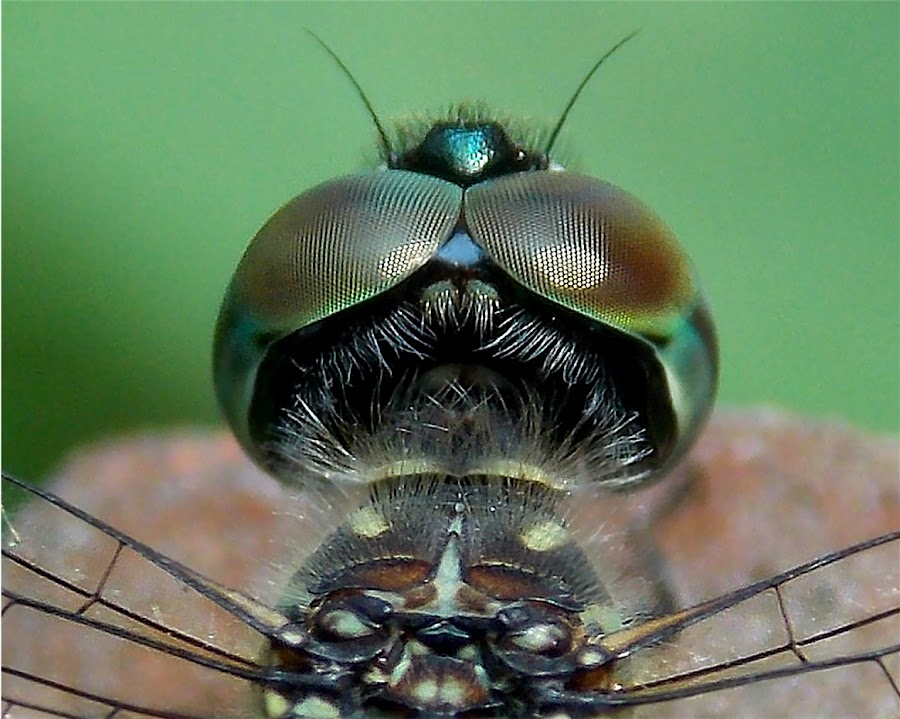 by William P. - Novices Only Macro