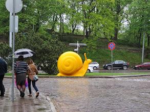 Photo: A big, yellow snail