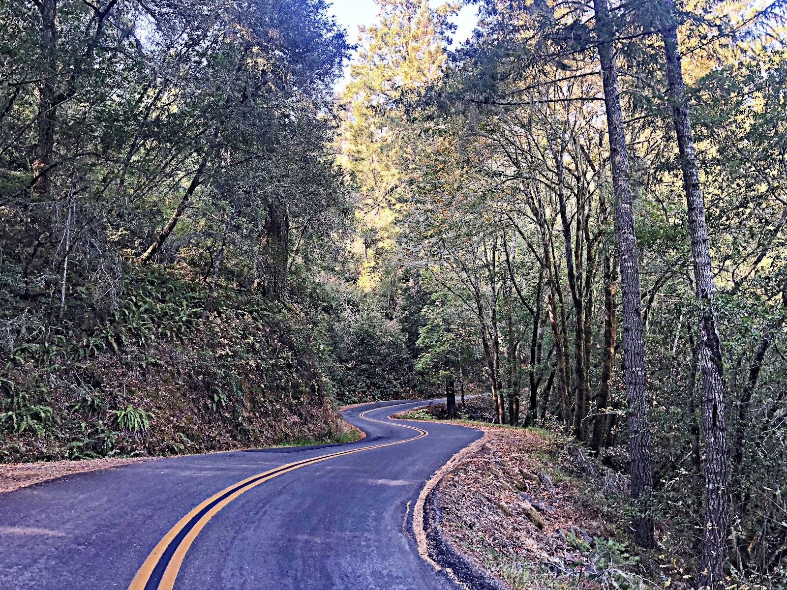 Bike climb Mt. Tamalpais from Alpine Dam - road surrounded by redwood trees