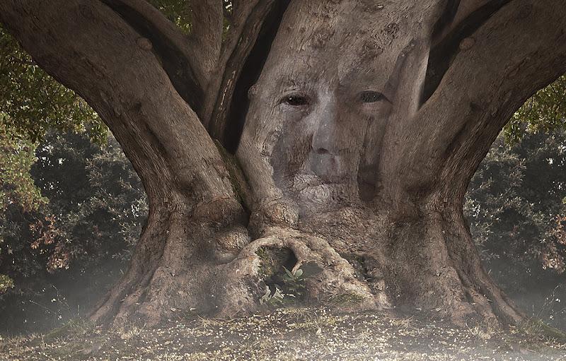 uno degli alberi diga di angelo27