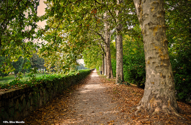 Padova  città giardino di onevision