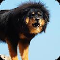 Tibetan Mastiff Live Wallpaper icon