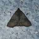 Praxis Moth