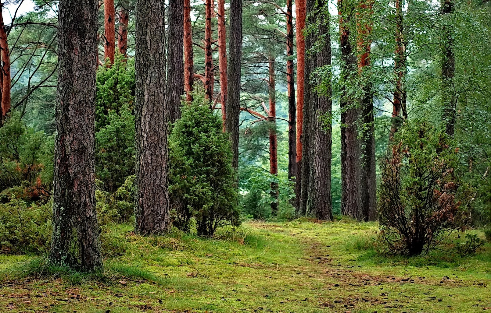 hình nền thiên nhiên đẹp 05