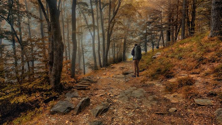 nuovi colori nel bosco di Daniela Ghezzi