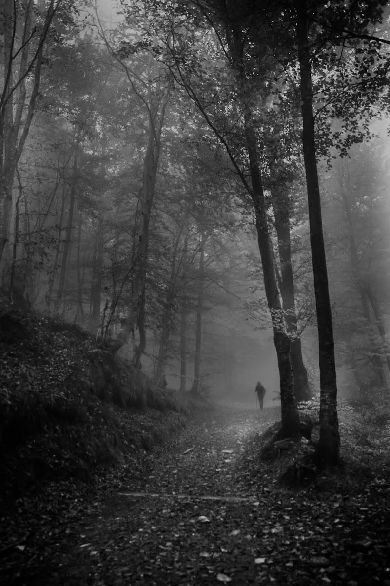 Addentrandosi nel fosco bosco di mariateresatoledo