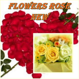 Flowers Rose - náhled
