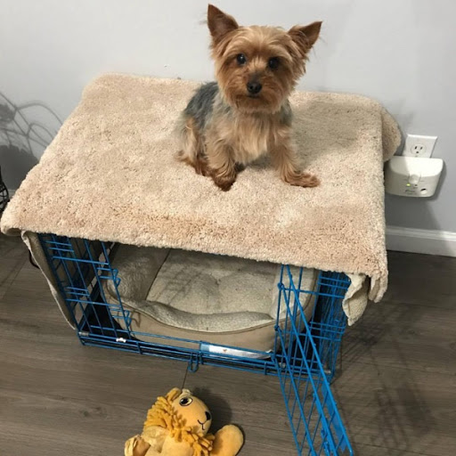 Doggy Brown, MISSING Oct 4, 2019