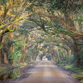 Road to Botany Bay by David Long - Landscapes Travel ( charleston, botany bay, south carolina )