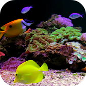 Coral Reef Aquarium Video FREE