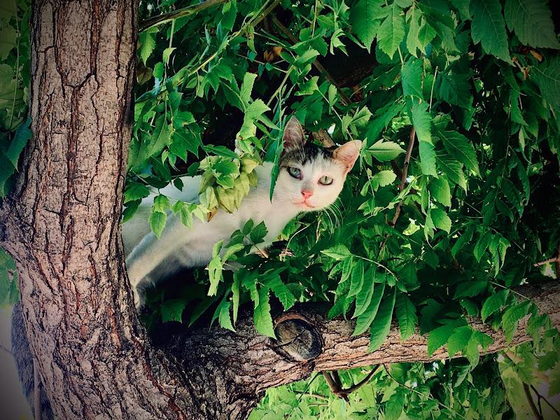 ...Gatto curioso... di Rosy Massaro