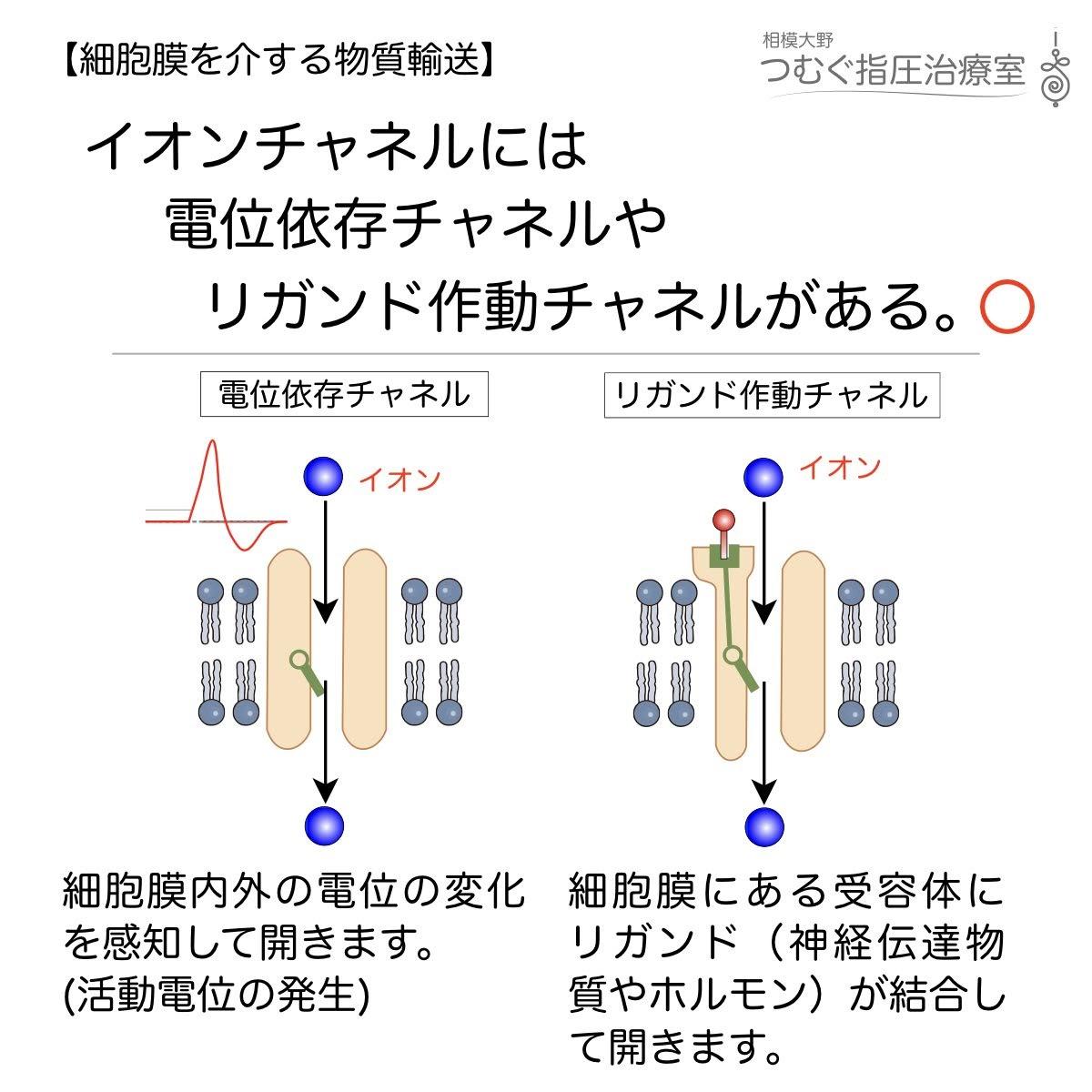 イオンチャネルには電位依存チャネルやリガンド作動チャネルがある