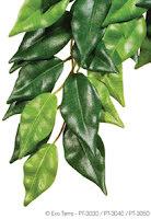 Ficus small