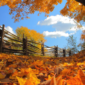 by Andy Barrow - Nature Up Close Trees & Bushes ( fall leaves on ground, fall leaves )