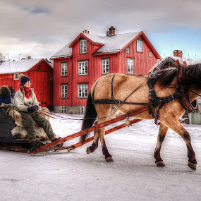 Julkut by Jan Helge - Transportation Other ( røros, horse, julkut, christmas, sleighride, norway,  )