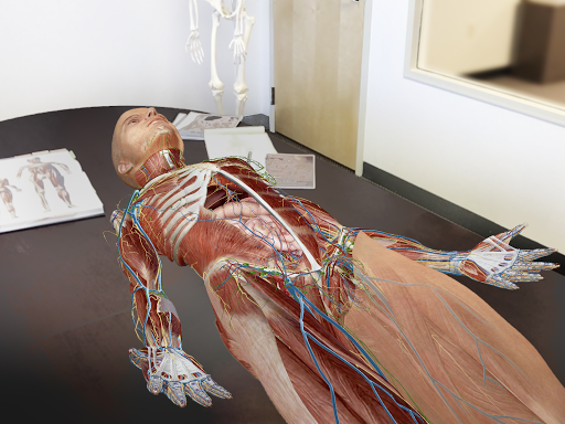Human Anatomy Atlas 2018 Complete 3d Human Body Apk Download Only