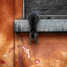 by Vukosava Radenovic - Animals - Cats Playing (  )