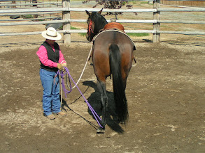 Photo: I am asking for a soft yield of the left hind foot. The rope is NOT run through the ring or hondo, so if the feeling bothers the horse, I can easily release.