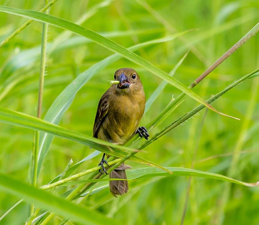 by Fares Ragunath - Animals Birds ( bird, green, beautiful, outdoor, feeding,  )