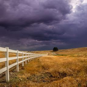 Millville Plains by Becca McKinnon - Landscapes Prairies, Meadows & Fields ( clouds, field, shasta, redding, storm, plain, prairie, millville plains )