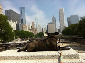 Photo: Malia in Chicago, IL