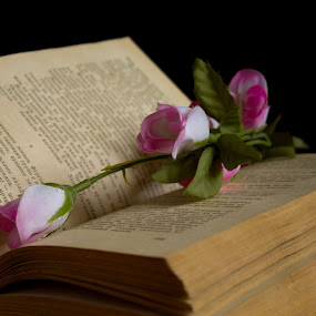 book and rose by Stanislav Tcolov - Artistic Objects Still Life ( old, reading, knowledge, paper, sheet.collection, retro, education, page, read, flowers, flower, black, literary, abstract, element, information, text, textbook, green, art, literature, learn, learning, school, color, bible )