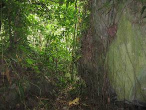 Photo: en de begroeiing van de rotsen is een sprookje