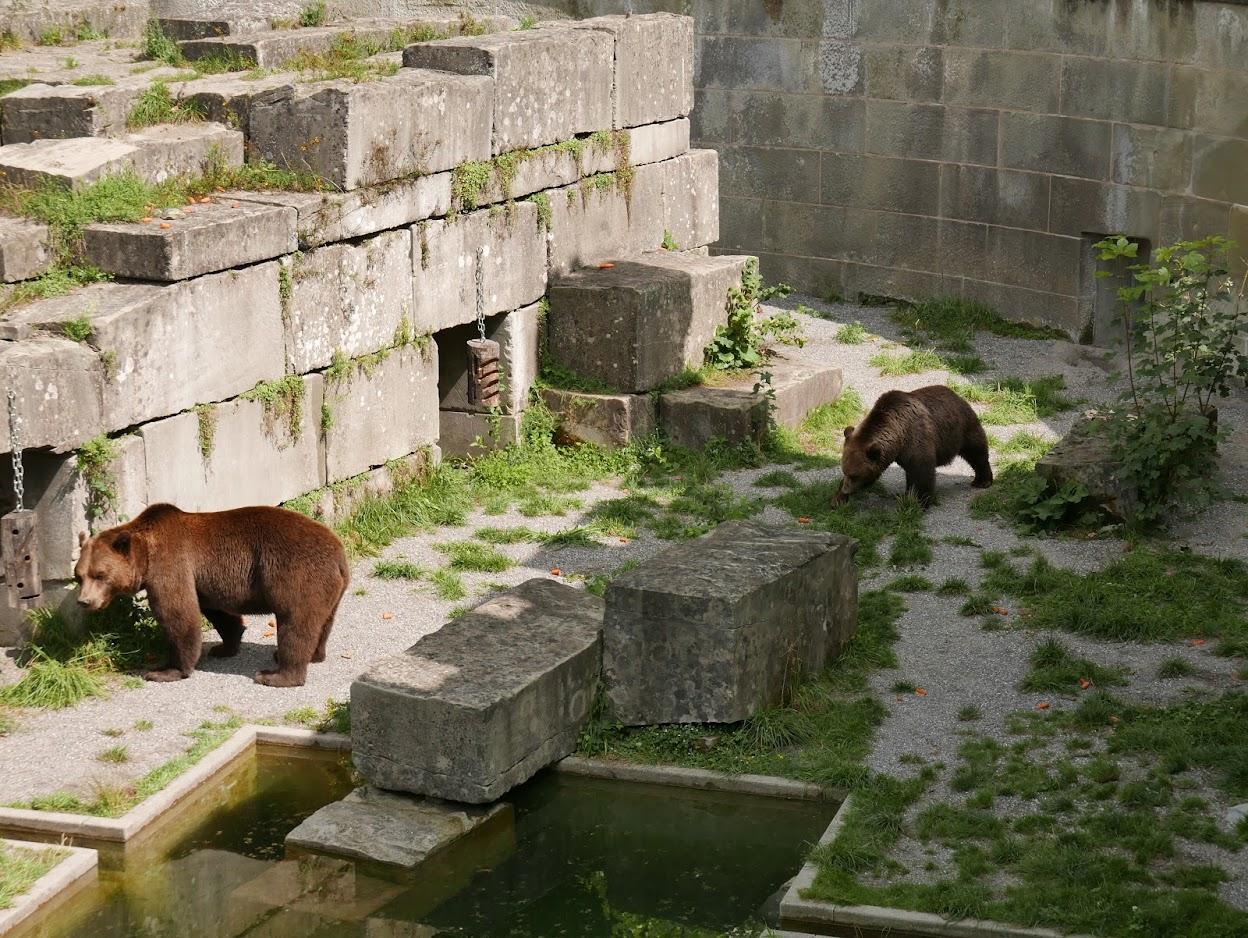 Parc aux ours - Tierpark à Berne