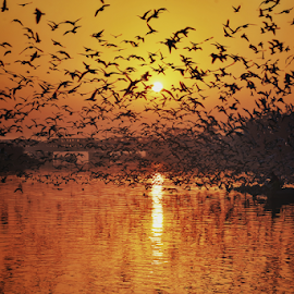 The ultimatesunrise   by Kallol Bhattacharjee - Landscapes Sunsets & Sunrises ( nikon, sunrise, bird, silhouette, river )