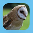 Identify Birds icon