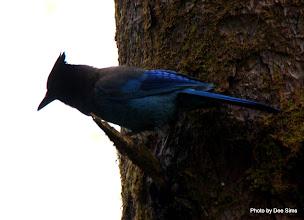 Photo: (Year 2) Day 348 - A Very Pretty Bird