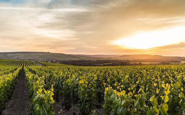 Терруары шампанского - почвы, где выращивают шампанское, регион Шампань, производство шампанского, как делают шампанское, французское шампанское, Франция, путеводитель по франции, скачать бесплатно, французские вина, шампанское из шампани, путеводитель по Шампани