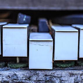 piano key by Mark Molinari - Black & White Objects & Still Life ( #broken, #music, #ivory, #piano, #keys,  )