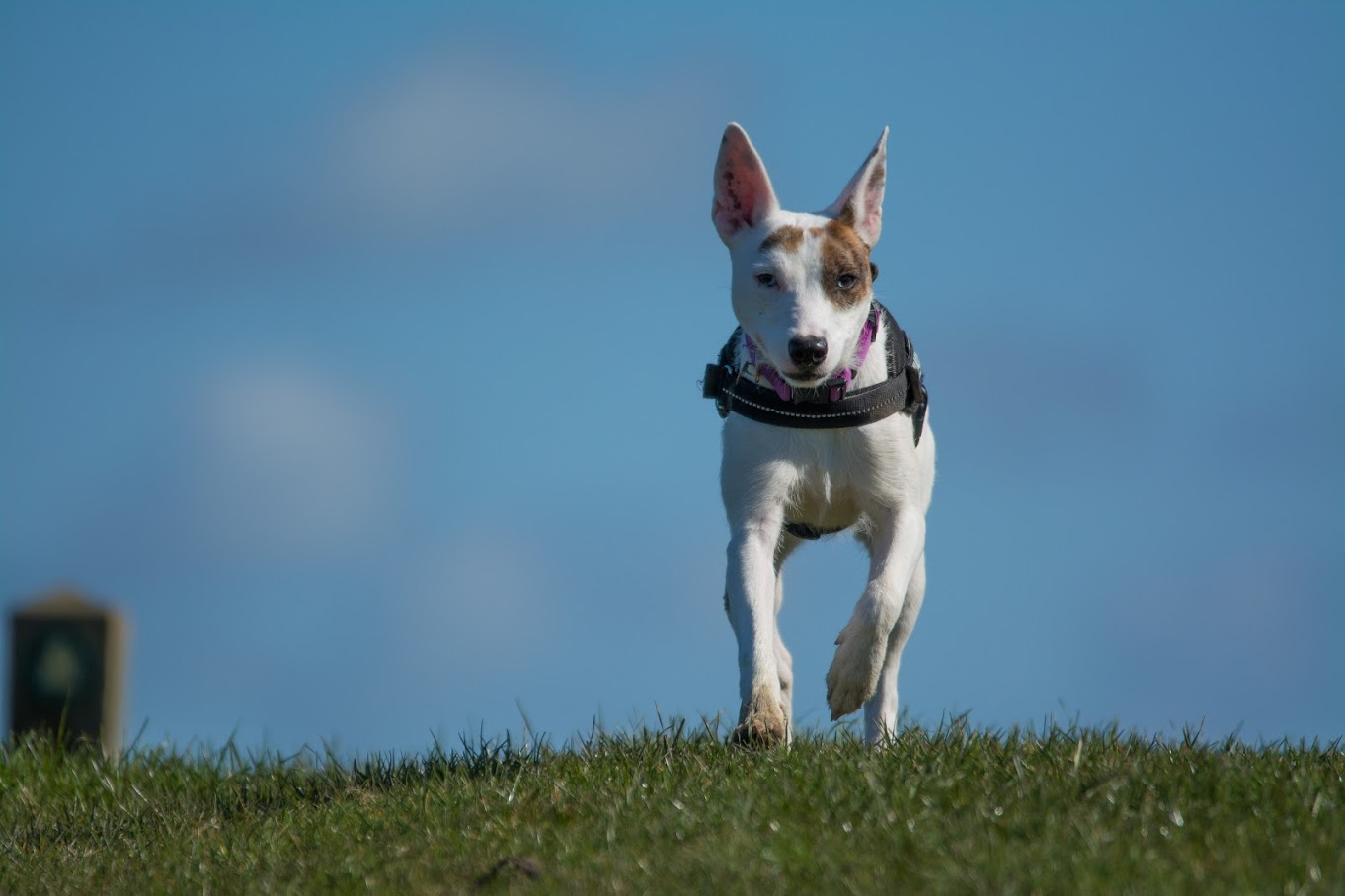 Pure Connection Dog Training Tenterden