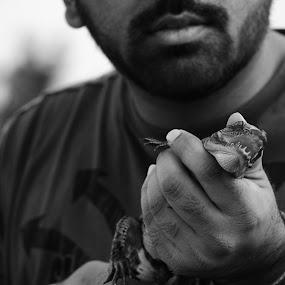 Baby Croc by Ravi Shankar - Animals Amphibians ( crocodile, baby crocodile, bute )