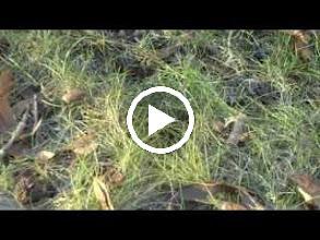 """Video: ตัวอย่างภาพยนตร์ """"Soil"""" (5.5 MB)"""