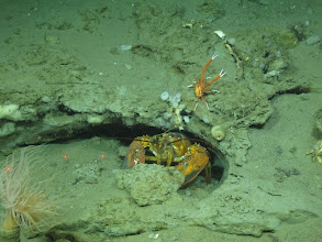 Photo: Image courtesy of Deepwater Canyons 2012 Expedition, NOAA-OER/BOEM.