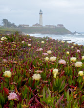 Photo: 4. That's the Pigeon Point lighthouse in the background and iceplants in the foreground. Iceplant can be beautiful in its own way, but is also considered a pest plant and people in some coastal areas spend considerable time pulling it up and then trying to reestablish native coastal plants.