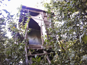 Photo: Hunter's lookout in the jungle, Ostoros, Hungary (2013)