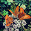 by Sergiu Mario - Nature Up Close Flowers - 2011-2013