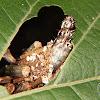 Bicho-do-cesto (Bagworm)