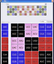 Photo: T/U=00   C=01   A=10   G=11.  AaBbCc configuration of (0) UUU phenylalanine with their codon values.  At the top is the sequential numerical order and dominant color of the 64 RNA codons. The RNA diagonal architecture is found by plotting the three color energy pairs that the RNA consists of and appears in at the deeper level in a vertical column on the left and then plotting each one of their three color energy pairs in horizontal rows to the right.  Note the genetic information is bilaterally organized along the diagonal (0) UUU, phe.