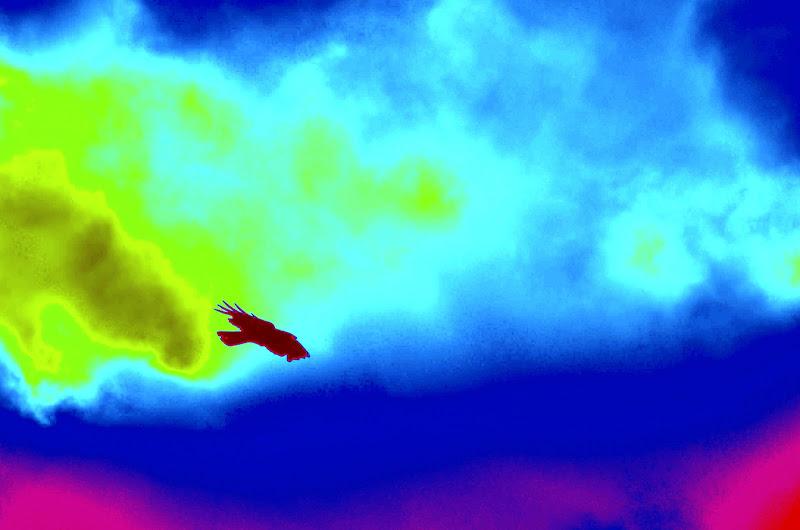 volo del corvo libero di corbellimax
