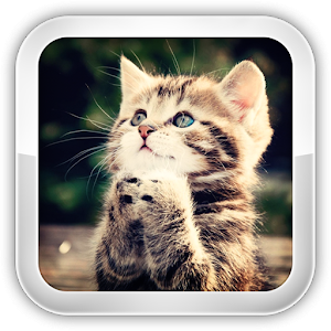 Cat Games for PC and MAC